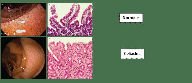 img_diagnosi